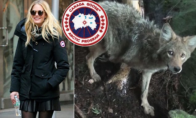 canada goose jacket dog fur